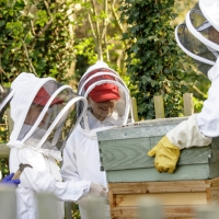 Can kids keep bees?