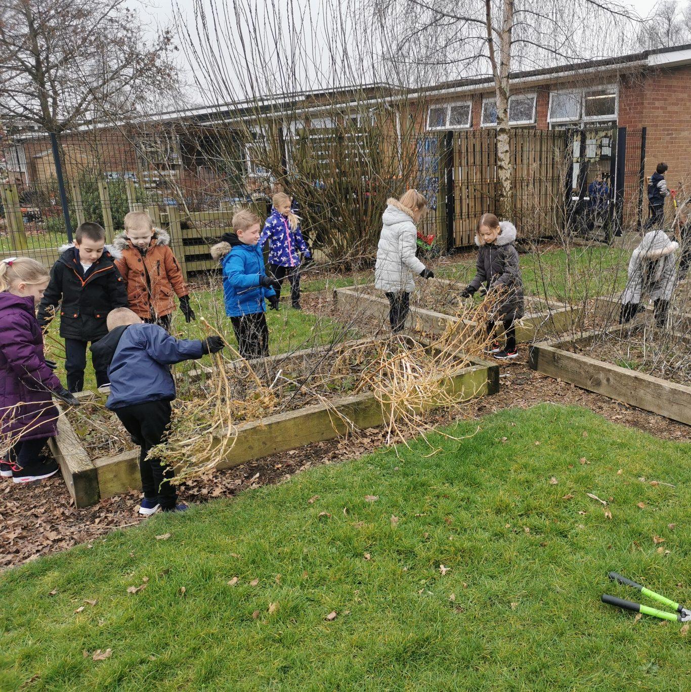 Children around school vegetable beds