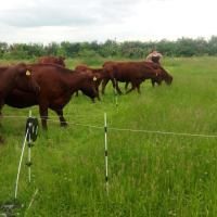 The Inkpot - a permaculture farm in Lincolnshire