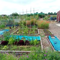 Low Fulney Family Allotments